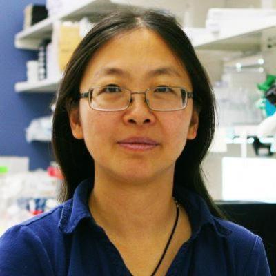 Jing Zhang, PhD, Professor of Oncology